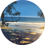 Original Waihi Pohutukawa NZ Landscape Painting by Artist Kirsten McIntosh of Kirsten McIntosh Art.